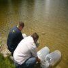 Zarybianie jeziorka miejskiego w Nidzicy