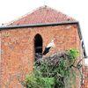 Mingajny: kościół