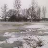 Łabędzie na rzece Drwęcy w Kurzetniku