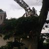 Powalone wiatrem drzewo uszkodziło zabytkową kaplicę w Łędławkach