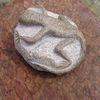 Gady z granitu