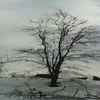 Zimowe Pareżki