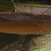 Wyciek substancji ropopochodnej w Nipkowie