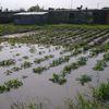 Zalane tereny w Gminie Kalinowo