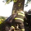 W Wilnowie uderzył sharanem w przydrożne drzewo