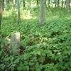 Opuszczone i zapuszczone cmentarze
