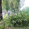 Wichura powaliła drzewa w Lubawie
