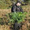 Policjanci spalili marihuanę wartą 600 tys. zł