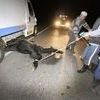 Samochód uderzył w konie