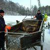Odłów karpia w Gospodarstwie Rybackim w Mrągowie
