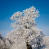 Zimowe krajobrazy koło Lubawy