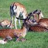 Kadzidłowo: Park Dzikich Zwierząt