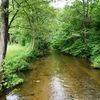 Rzeka Nidka