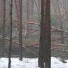 Zima niszczy las