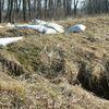 Napisali do nas: bobry niszczą wały na Wyspie Nowakowskiej