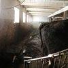 Interwencja Animalsów w gospodarstiwe w gminie Młynary