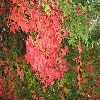 Kolorowa jesień