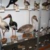 Krutyń: Muzeum Przyrodnicze Mazurskiego Parku Krajobrazowego