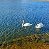 Wiosna nad jeziorem Roś