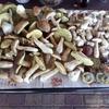 Grzyby, grzyby, grzybobranie. Galeria czytelników