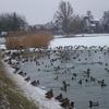 Ptaki z Bartoszyc i okolic